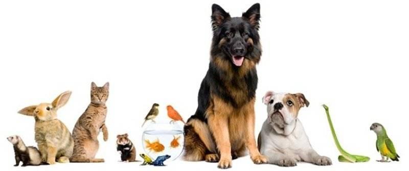 Mettersi in proprio a basso costo: il pet-sitter