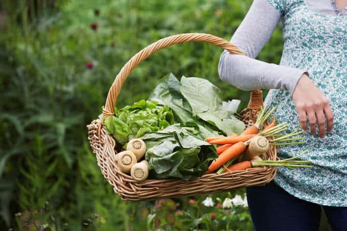 InnovUp, al via nuova call per le startup dell'Agrifood