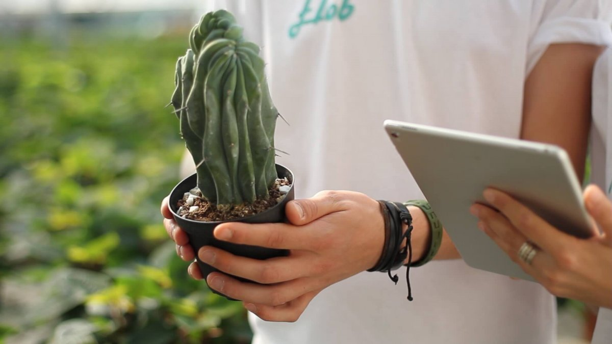 Arriva Flob, il negozio online di piante e fiori